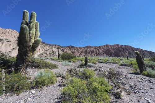 Deurstickers Canarische Eilanden Cactus Quebrada de Humahuaca in Jujuy, Argentina.