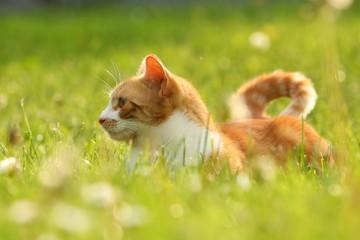 Rote Katze leuchtet im Frühling