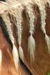 Blond mane horse with braids