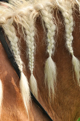 Blond mane horse with braids