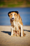 cool dog in a cap on the beach