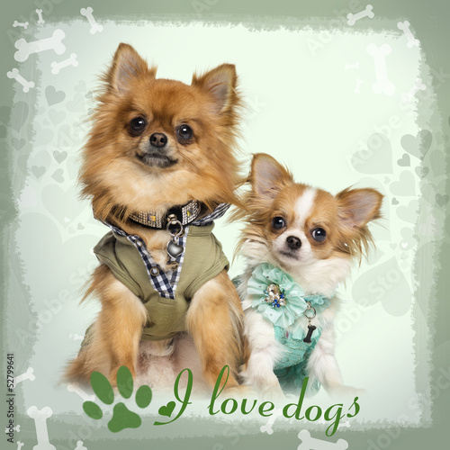 Two dressed up Chihuahuas sitting, on designed background