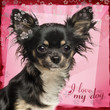 Close up of a Chihuahua on fancy background
