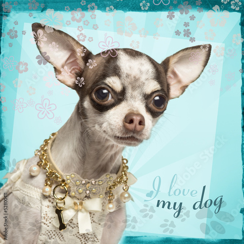 Close-up of Chihuahua with fancy collar, on flowery background