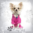 Dressed up Chihuahua with fancy collar on designed background