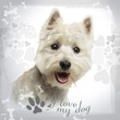 Close-up of a West Highland White Terrier panting