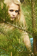 Beautiful blond woman behind a pine in a forest