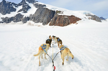 Dog sled competition