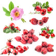 Dog rose (Rosa canina) flowers and fruits isolated on white