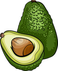 avocado fruit cartoon illustration