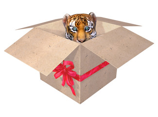 Beautiful little tiger in a box.