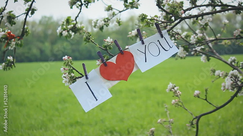 declaration of love on spring tree