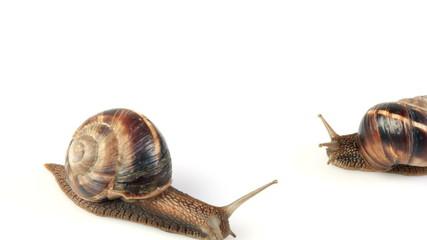 Snail Mating Timelapse