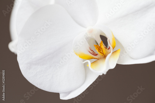 White orchid on brown background..