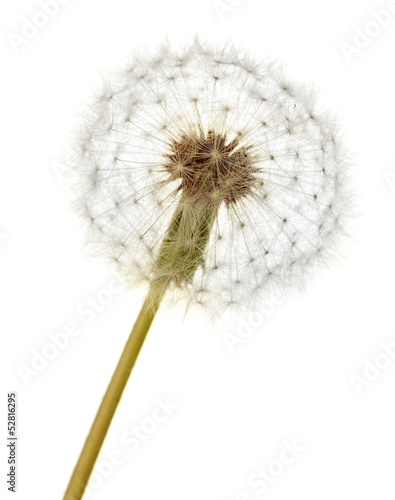 Dandelion isolated on white © Africa Studio