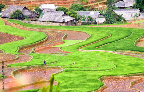 Rice Terraces in Northern of Vietnam