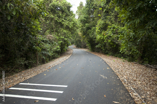 road in woods, grey road to forest showing road marking lines