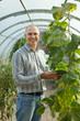 farmer looks cucumbers plant