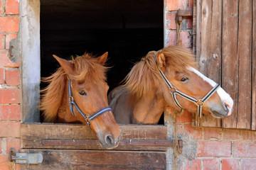 Ponys im Stall