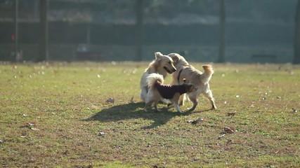 Tre cani giocano al parco