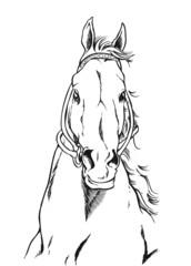 馬ー正面顔