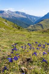 Valle de Hecho. Pirineos. Huesca.