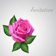 Gift card with pink rose flower. Eps10 floral illustration