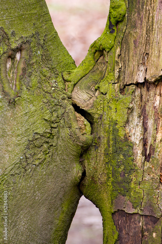 Close-up of kissing trees