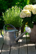 Watering can next to Hydrangea.