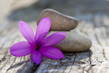 piedras y flor violeta