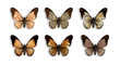 a series of butterflies with wings animal skin