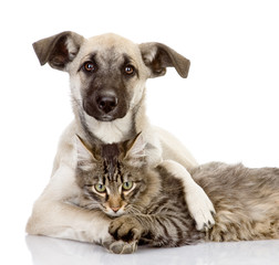 the dog hugs a cat. isolated on white