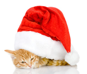 Cat in a Santa Claus hat. isolated on white