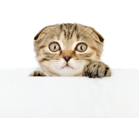 scared kitten looking out because of the poster. isolated