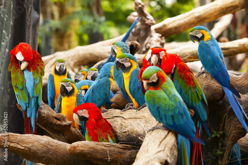 Poster Papegaai parrot