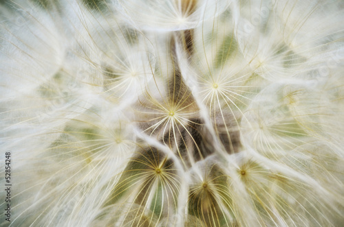 abstract extreme dandelion flower