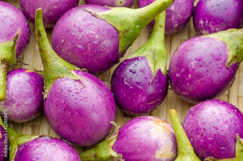 Purple eggplant or cockroach berry