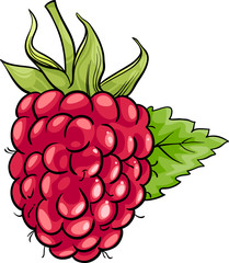 raspberry fruit cartoon illustration