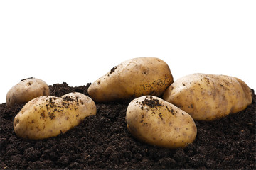 dug potatoes on the ground on a white