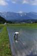 春の水田の風景