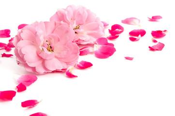 Rosenblüten und Rosenblätter