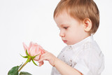 Little boy touching the rose, on a gray background
