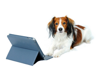 Cute Dog and a Tablet