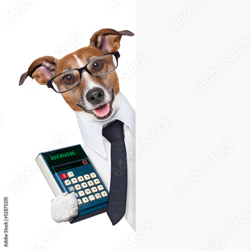 accountant dog