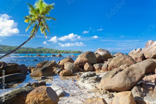 paysage des Seychelles, lagon, rochers et cocotier