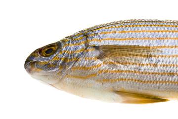 Salema porgy - sarpa fish