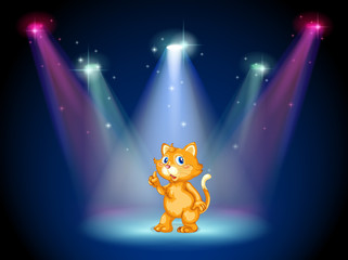 A cat in the middle of the stage under the spotlights