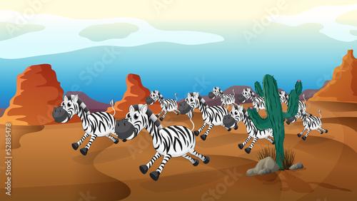 A group of zebra running at the desert