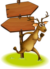 A deer passing the empty wooden arrowboard