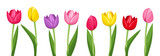 Tulips of various colors. Vector illustration. - 52898075